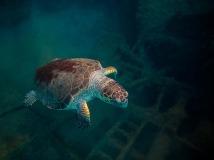 ABP CM-PANTELIS KRANOS-Floating in the sea-Cyprus