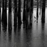FIAP Bronze-Jiahu She-The egret in cold forest-China