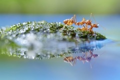 FIAP Gold-Andreas Yunisantoso-THE ANTS LIFE-Indonesia