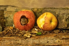 ABP Gold-Judy Smith-An Apple a Day-United Kingdom