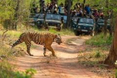 BPS Bronze-Gangadhar AG-TIGER CROSSING-India