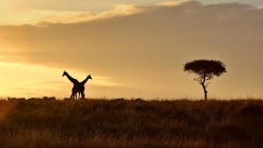 FIAP HM Ribbon-Golam Siddiqui-Masai Mara at Dusk-Bangladesh