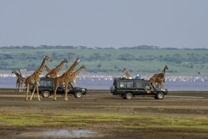 Photographer of the Year Worldwide, ABP Trophy: Sathyanarayana C.R. Photo title: Traffic Jam, Country: India